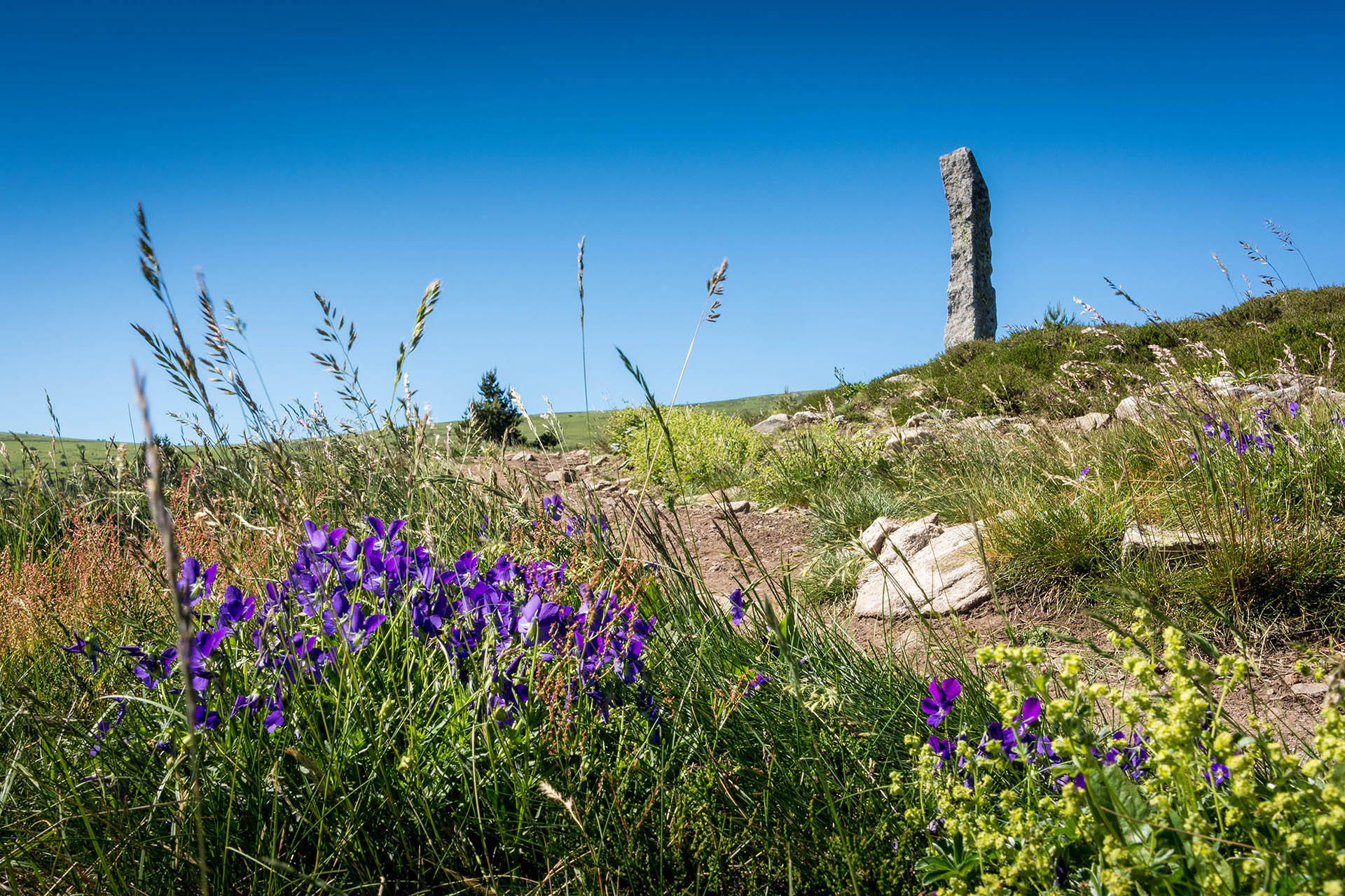 Path with wild flowers and marker stone on Mont Lozere, a mountain in Cevennes