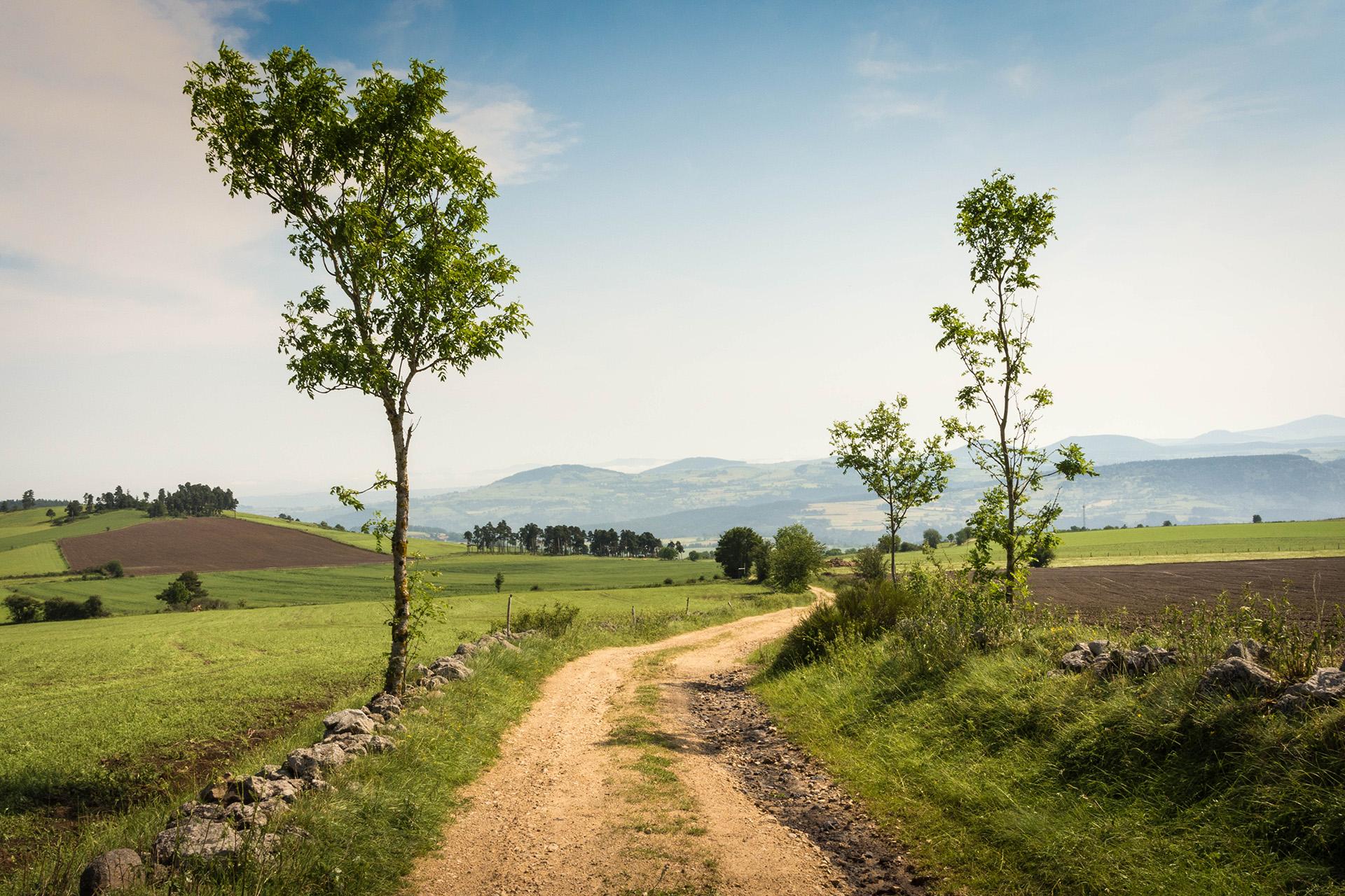 The GR70 Stevenson Trail winding through the volcanic landscape of the Velay
