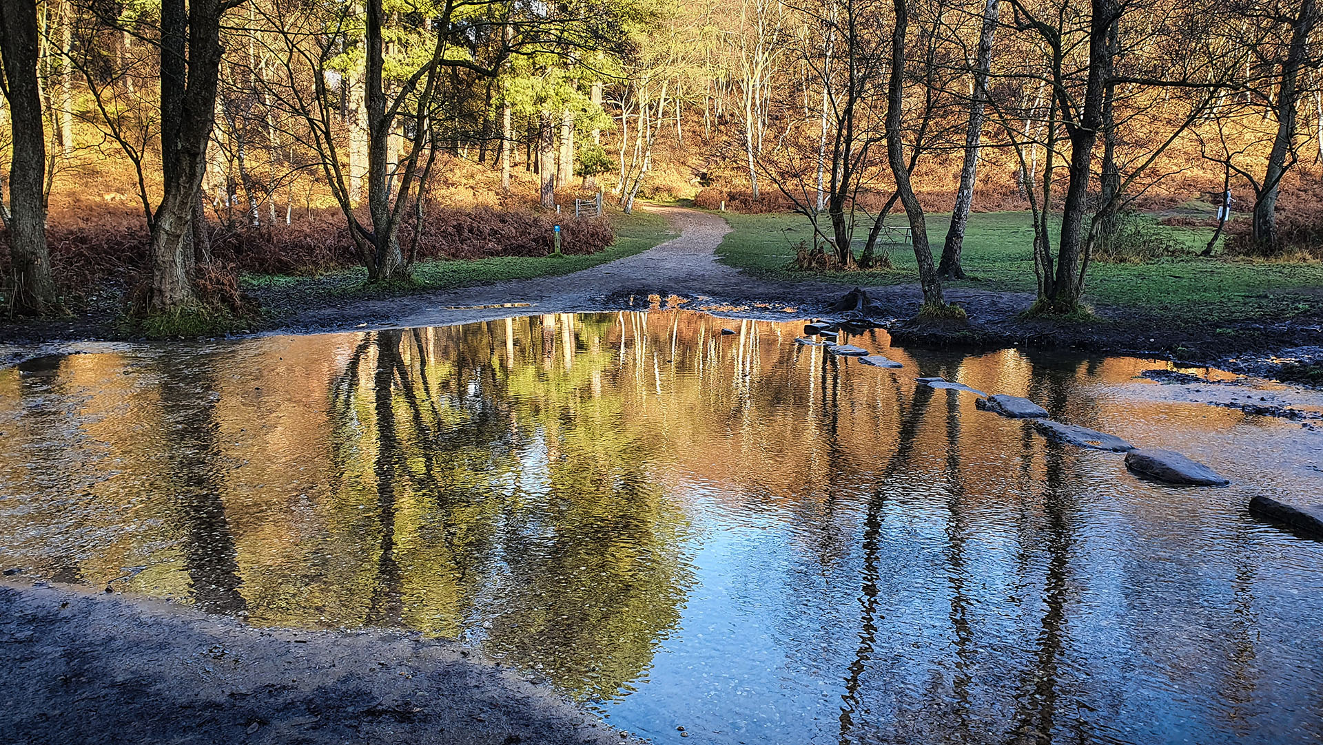 Autumn colours at the Stepping Stones crossing of the Sher brook, one of the loveliest spots at Staffordshire's beautiful Cannock Chase