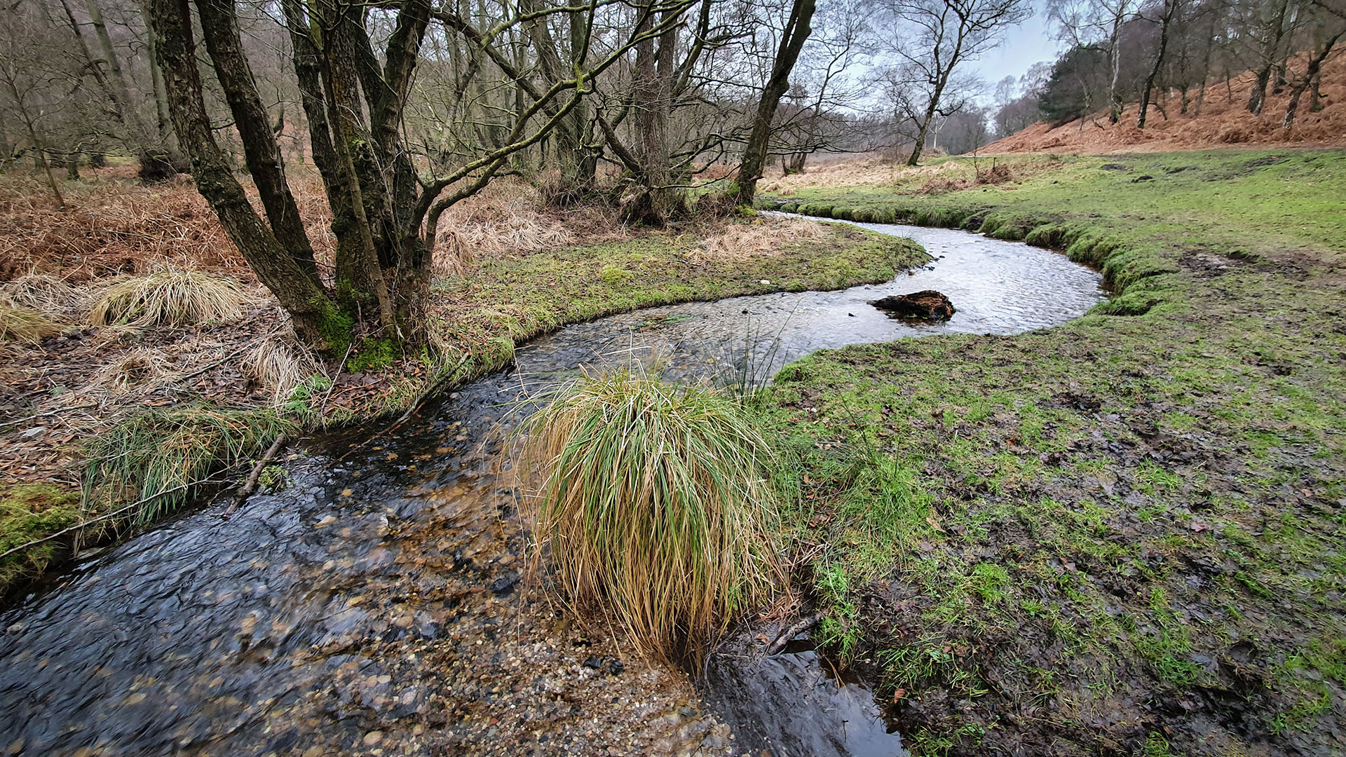 A meandering section of the pretty Sher Brook near Devil's Dumble